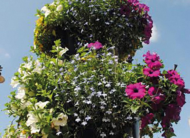 13 a lucky number for Britain in Bloom success