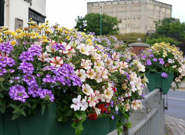 5 top tips for a successful Britain in Bloom judges' visit