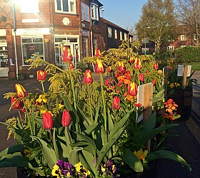 Amberol's self-watering planters look good for years say Draycott in Bloom