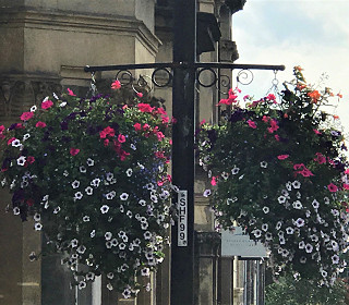 What's the best way to water hanging baskets?
