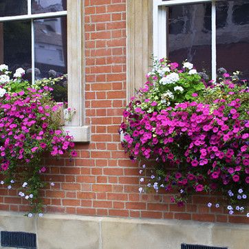 Wall & Window Boxes