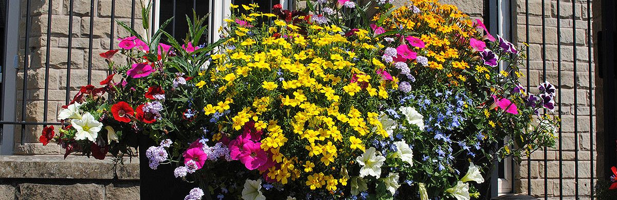 City centre self-watering planter filled with colourful flowers