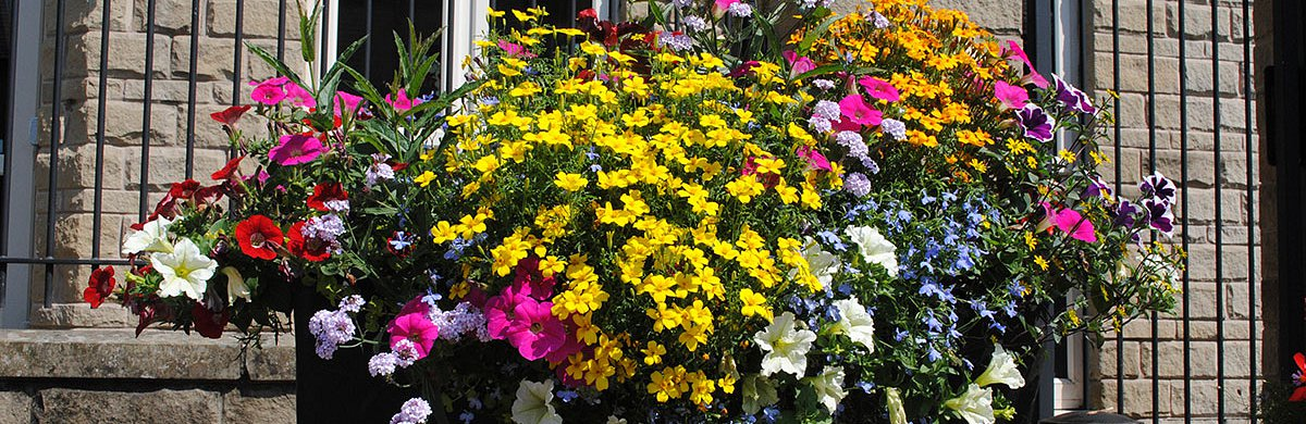 Photo of hanging basket