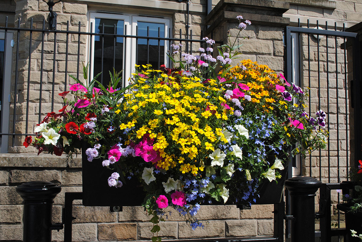 Barrier Baskets & Window Boxes supplied by Amberol