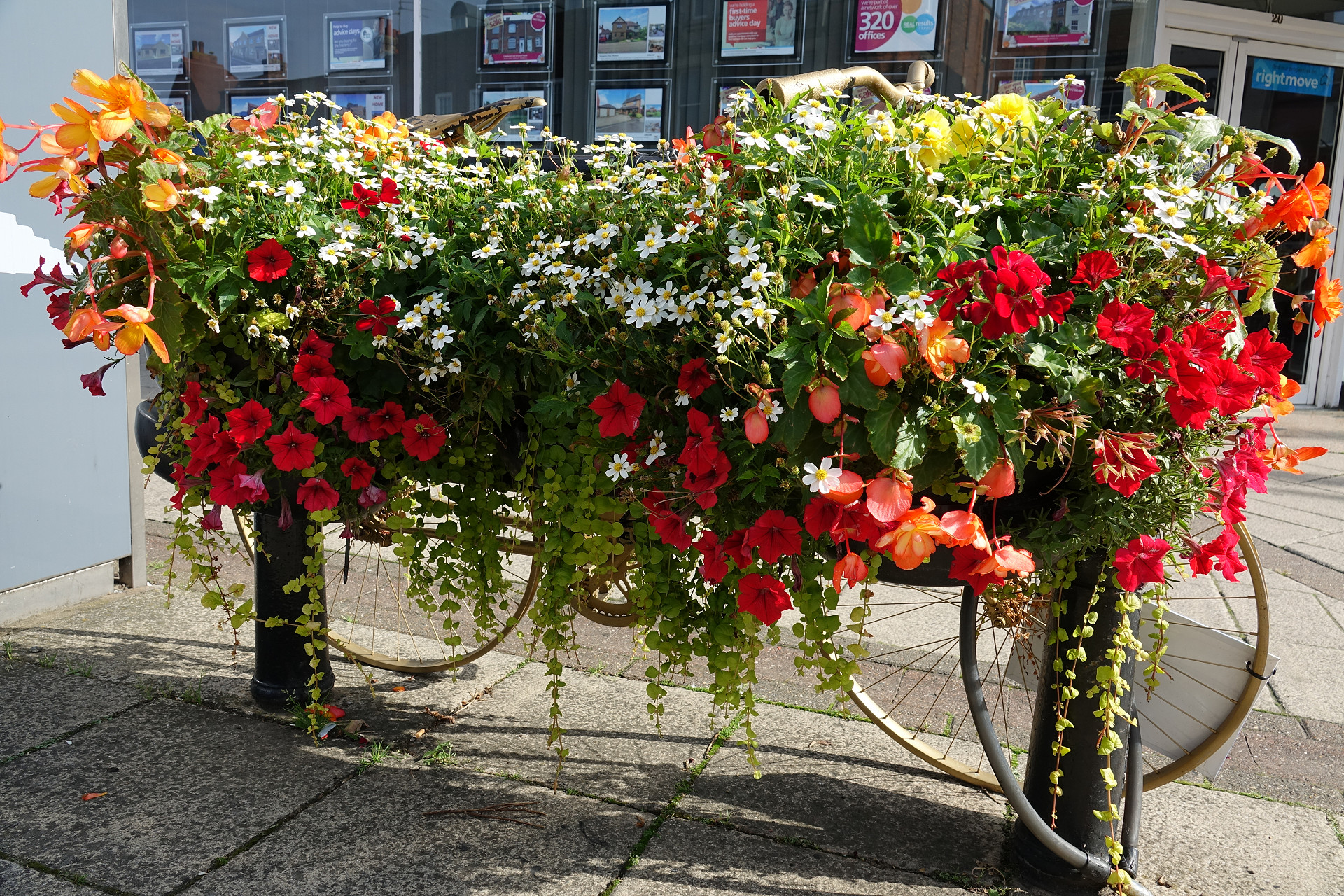 Amberol hanging baskets